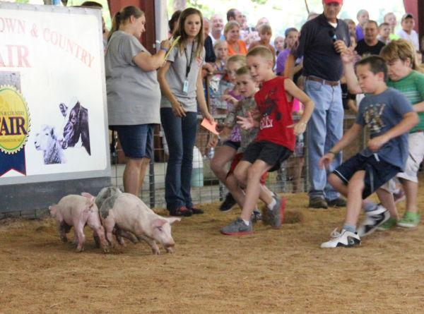 018 Pig Chase 2013.jpg