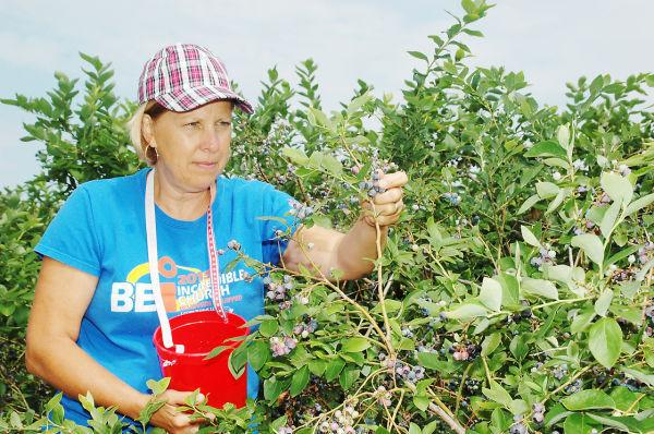 Finding Thrill on Blueberry Hill