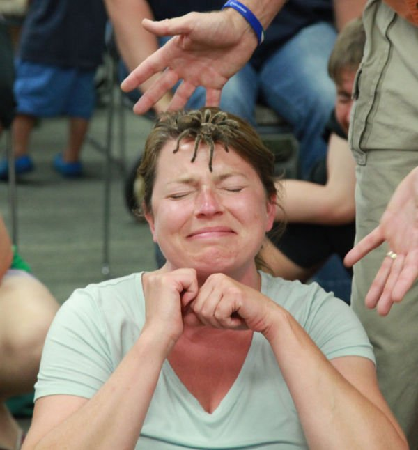 029 Reptile Show at Library 2014.jpg