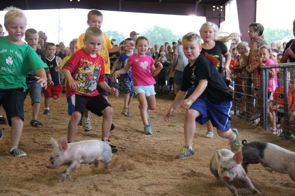 013 Pig Chase 2013.jpg