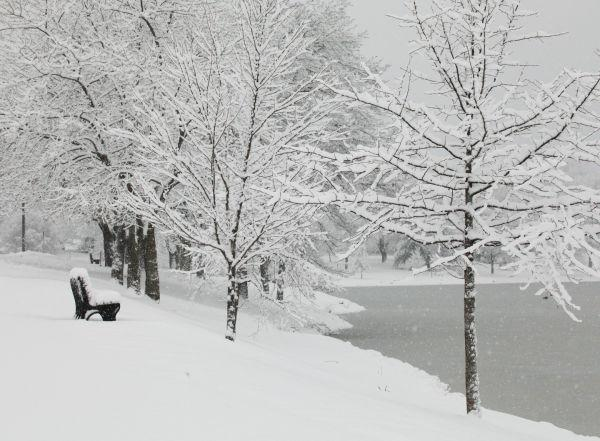 009 Snow December 14 2013.jpg