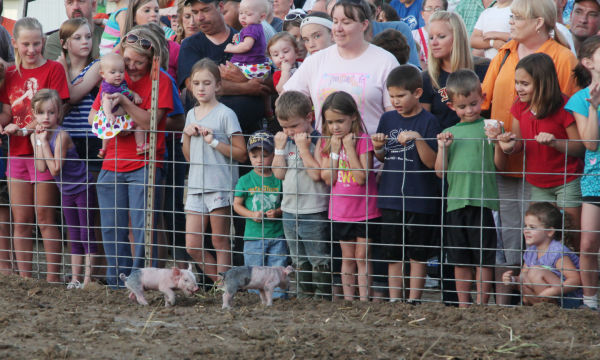 001 New Haven Youth Fair Pig Chase 2013.jpg
