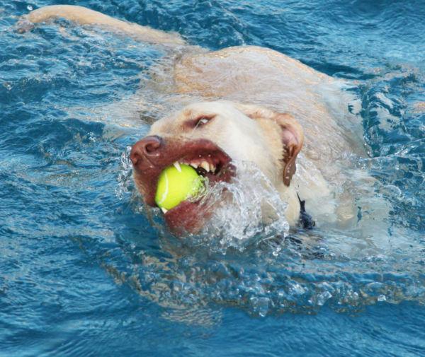 010 Doggie Dip 2013.jpg