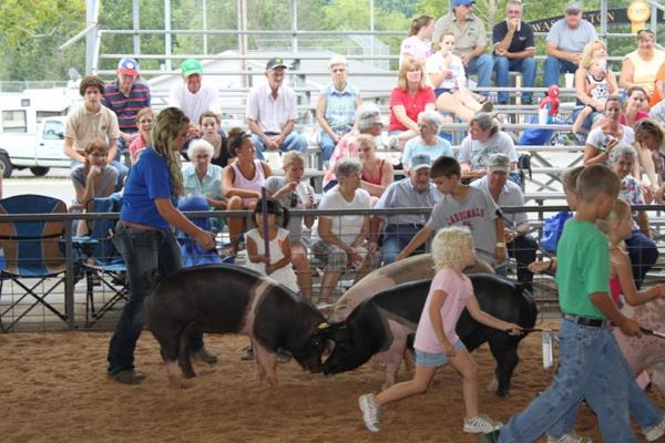 038 Fair Livestock.jpg