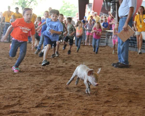 009 Fair Pig Chase 2014.jpg