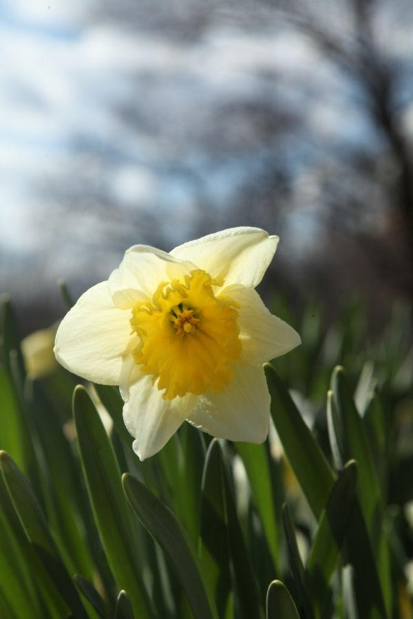 043 SNR Easter.jpg