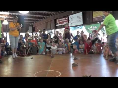 Turtle Race at 2014 fair