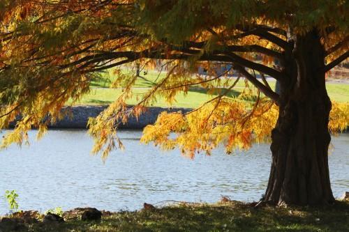 010 Fall trees.jpg