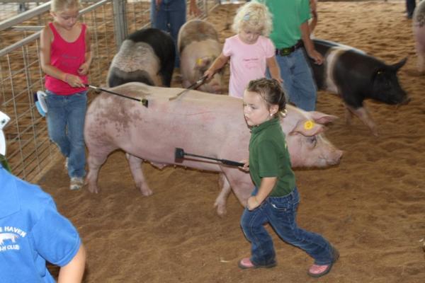 037 Fair Livestock.jpg