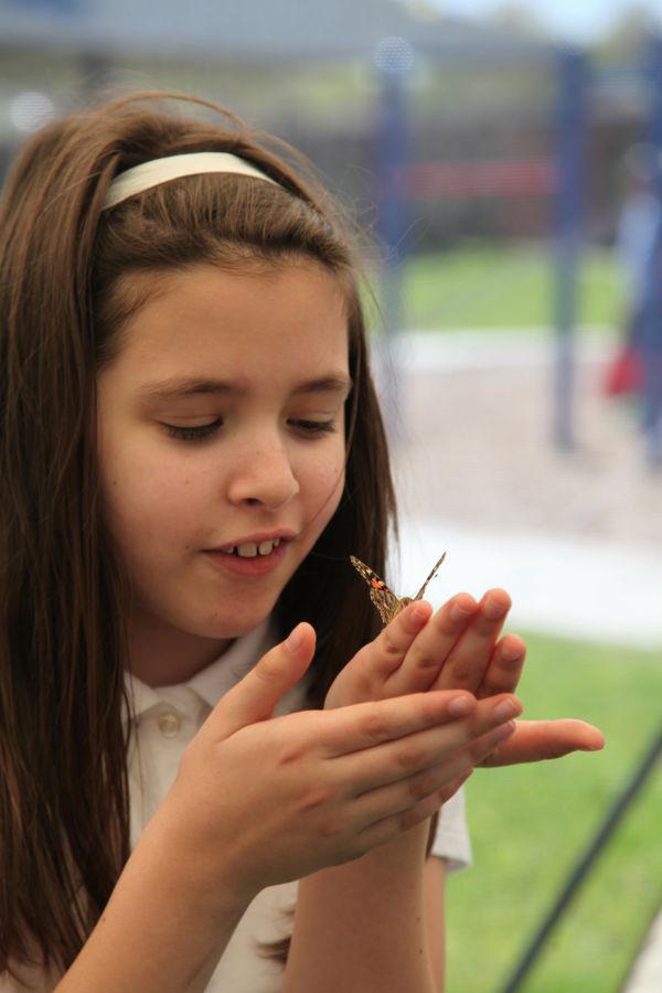 010 oll butterflies.jpg