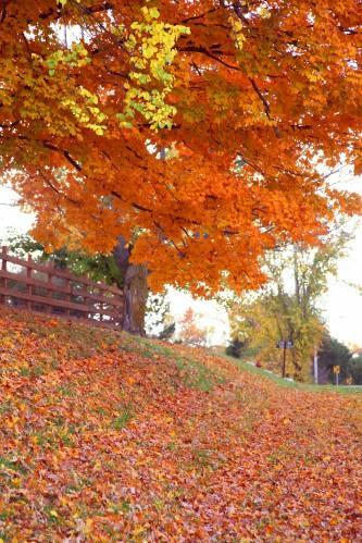 016 Fall trees.jpg