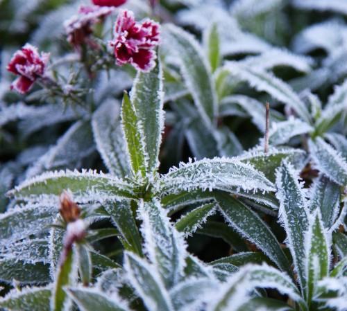002 Frost.jpg