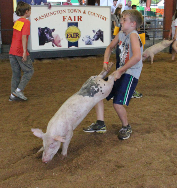 039 Pig Chase 2013.jpg