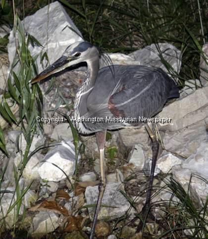 Crane at Lions Lake