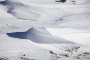 028 Snow January 6 2014.jpg