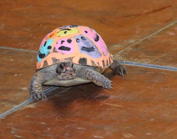 012 Turtle race 2013.jpg