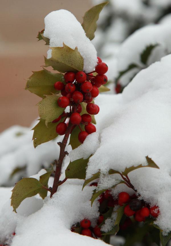 024 Snow Jan 2 2014.jpg