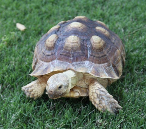 Tortoise 6
