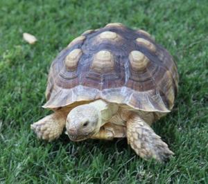 Tortoise 6