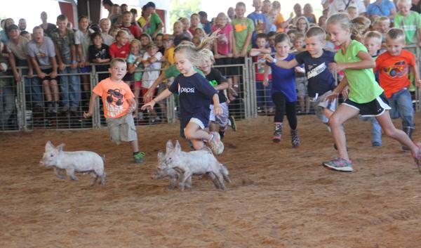 004 Fair Pig Chase 2014.jpg