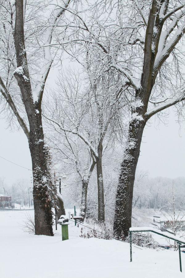 046 Snow December 14 2013.jpg