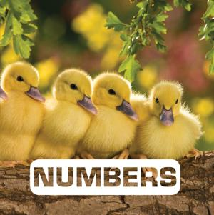 "Review: ""Numbers (Picture This)"" by Judith Nouvi"