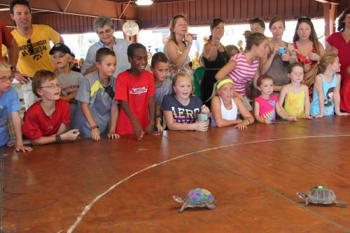 003 Turtle.jpg