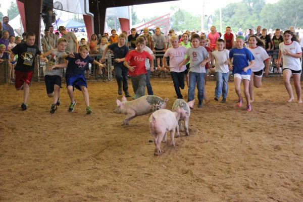034 Pig Chase 2013.jpg