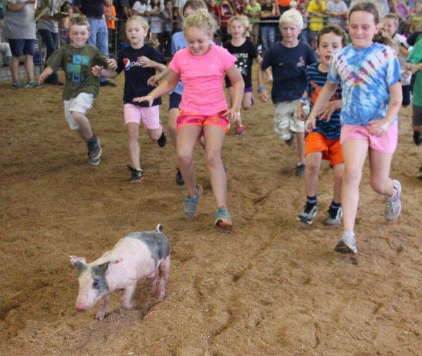 020 Pig Chase 2013.jpg