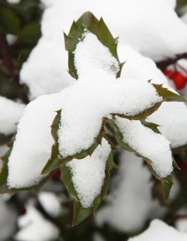 021 Snow Jan 2 2014.jpg