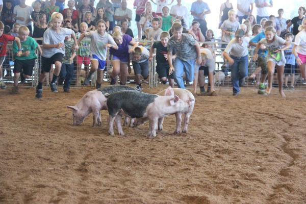 021 Fair Pig Chase 2014.jpg