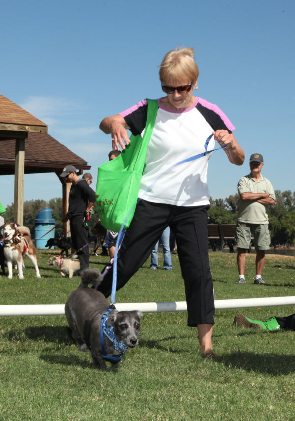 010 Strut Your Mutt 2013.jpg