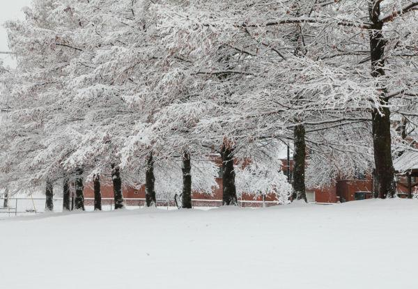 031 Snow December 14 2013.jpg
