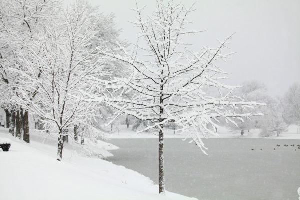 008 Snow December 14 2013.jpg