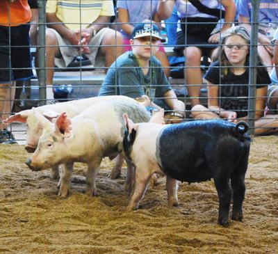 014 Washington Fair Pig Chase.jpg