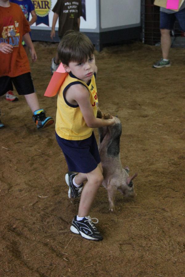 010 Pig Chase 2013.jpg