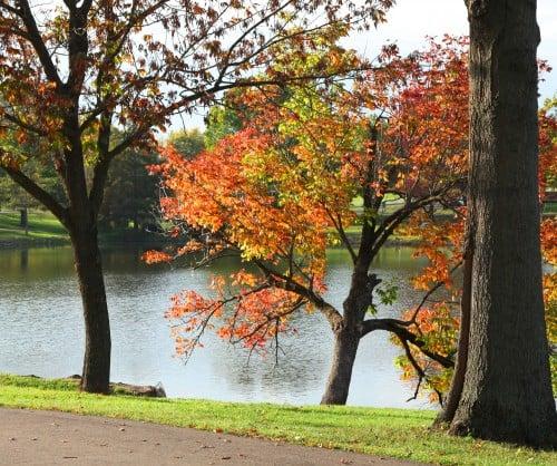 020 Fall trees.jpg