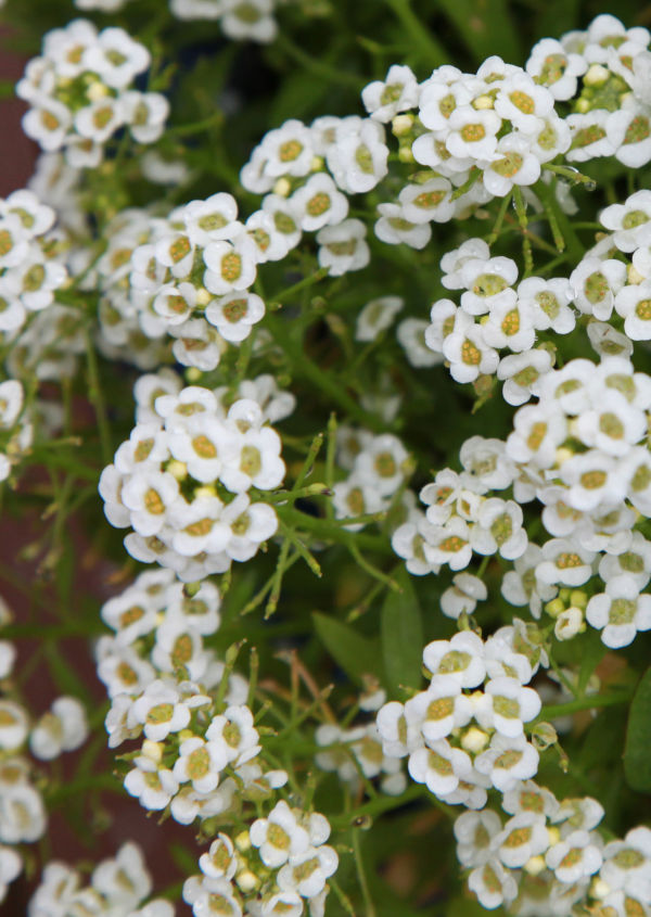 022 Early Summer Blooms 2014.jpg