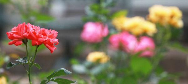 003 Early Summer Blooms 2014.jpg