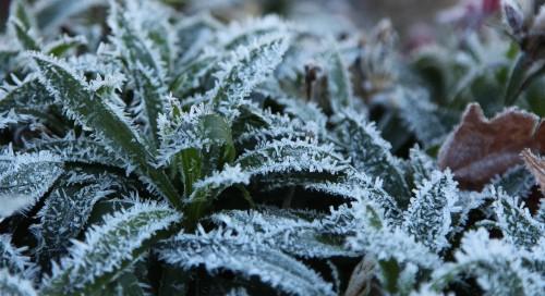 003 Frost.jpg
