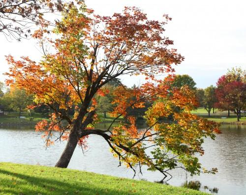 022 Fall trees.jpg