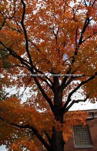 Autumn Tree Colors