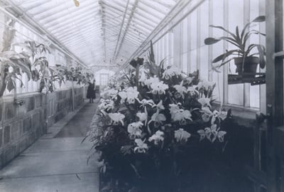 Greenhouse at Missouri Botanical Garden Extension