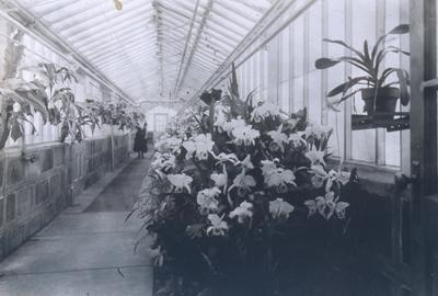 Greenhouse at Missouri Botanical Garden Extension
