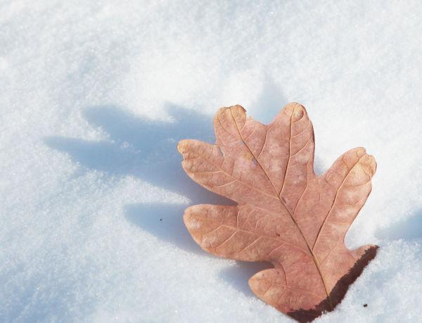 008 Snow Jan 2 2014.jpg