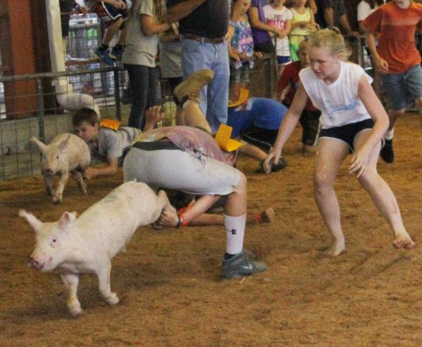 032 Pig Chase 2013.jpg