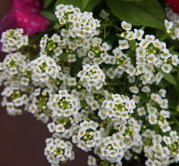 024 Early Summer Blooms 2014.jpg