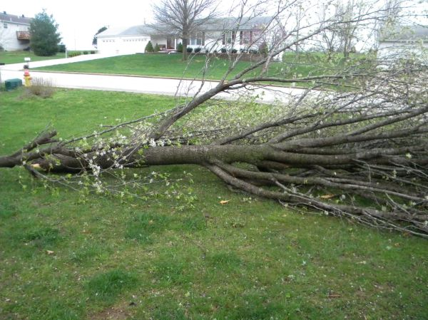 Branches Down in Union