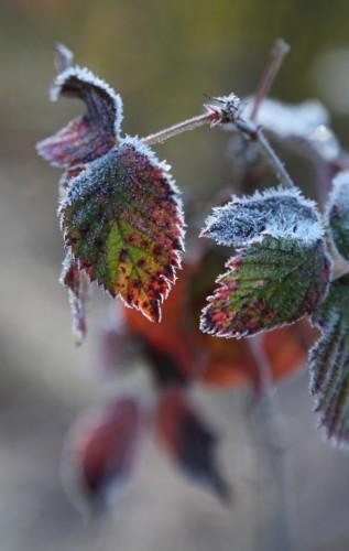 006 Frost.jpg