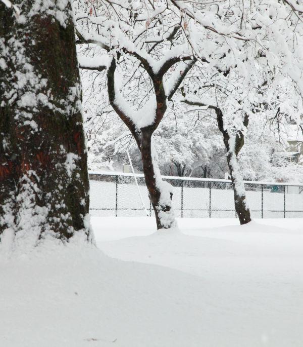 033 Snow December 14 2013.jpg